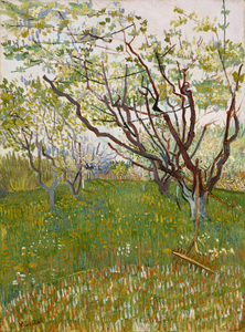 Vincent van Gogh - The flowering orchard